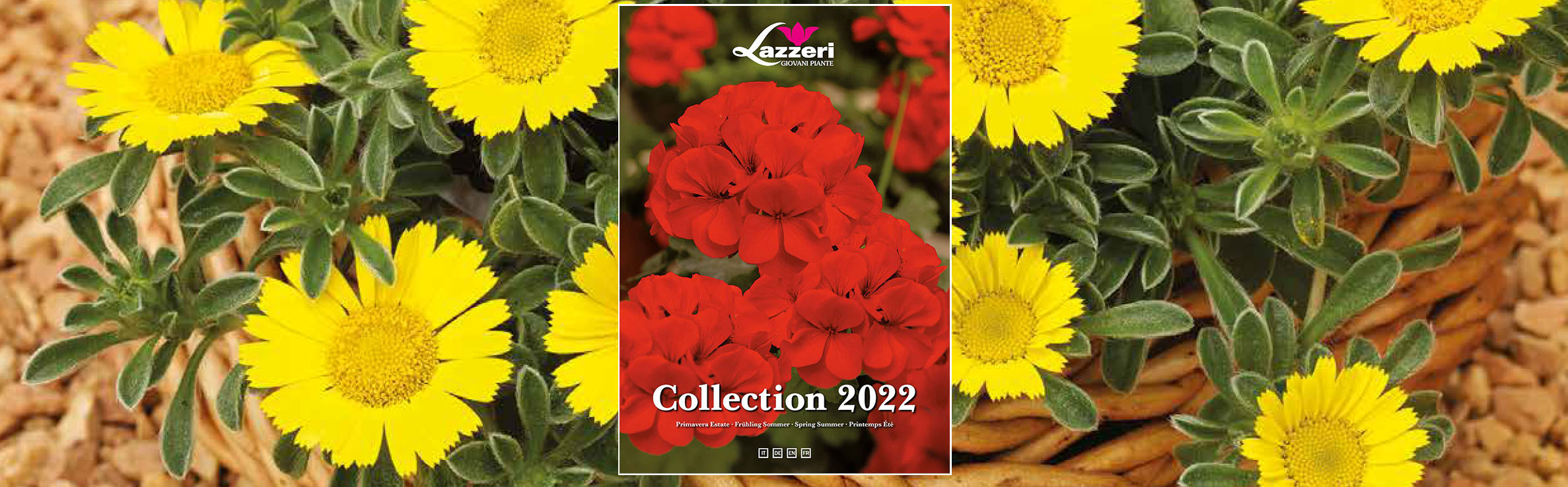 The new catalogue is online