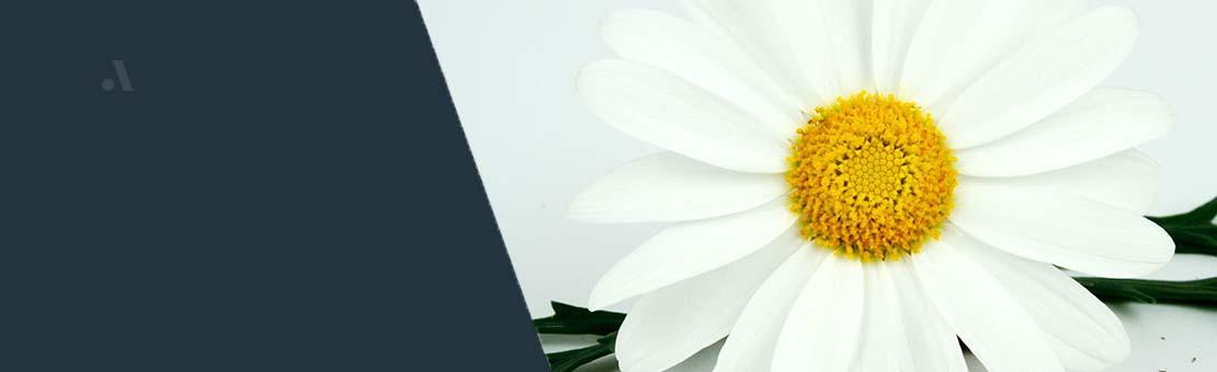 Seit über 40 Jahren ist Lazzeri der führende Produzent von Jungpflanzen für Zierpflanzen in Italien.
